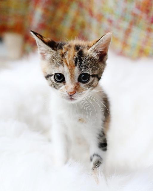 kitten-3081939_640.jpg