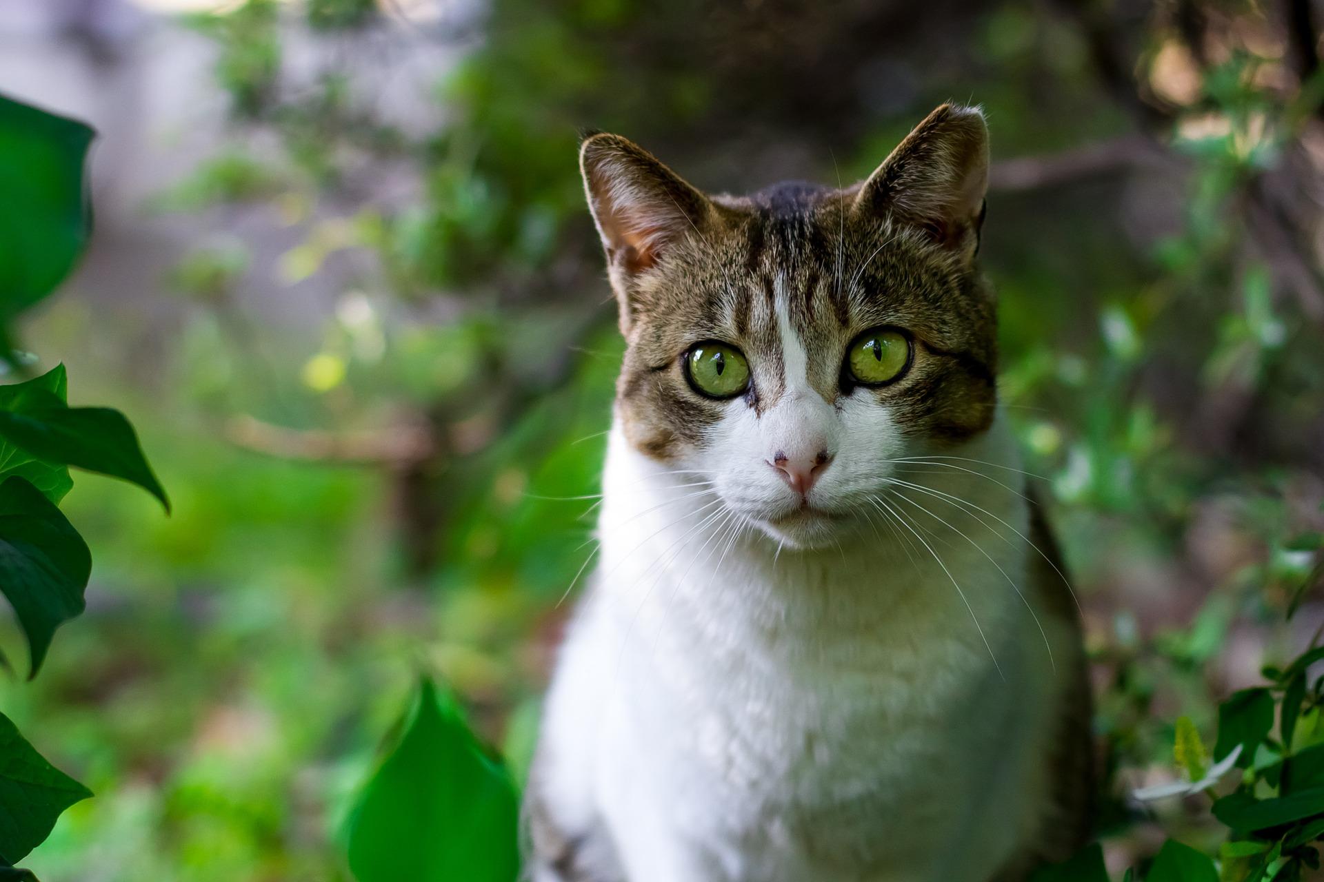 cat-725793_1920.jpg